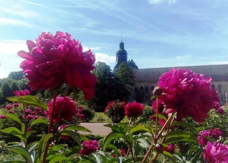 Visites Guidées Des Jardins Thématiques à Thiron Gardais