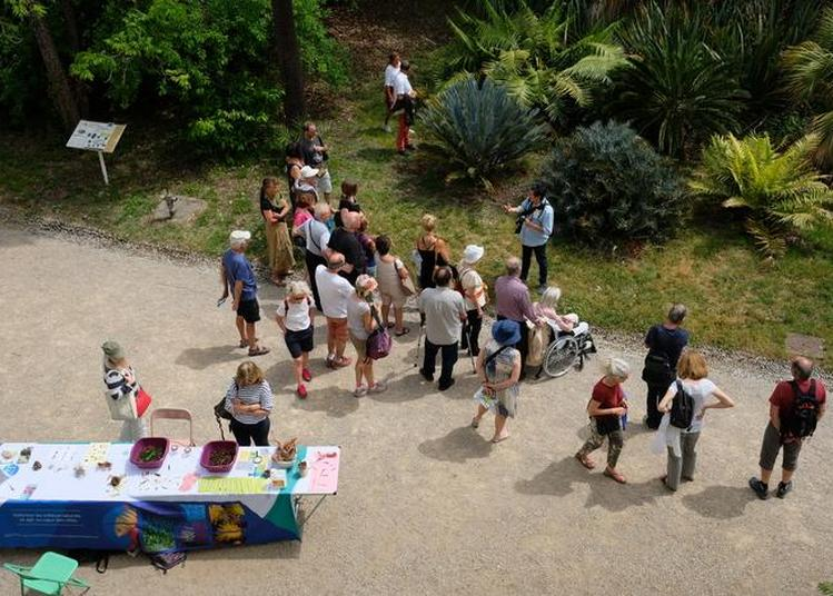 Visites Guidées Du Jardin Thuret à Antibes