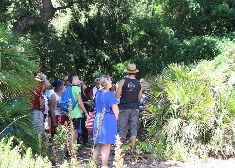 Visites Guidées Introductives Du Jardin à Rayol Canadel sur Mer