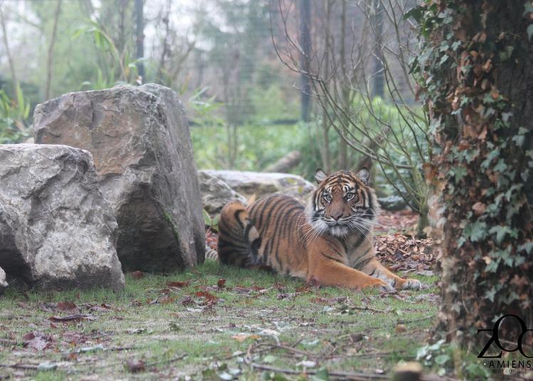 Week-end Conservation Zoo Amiens Métropole
