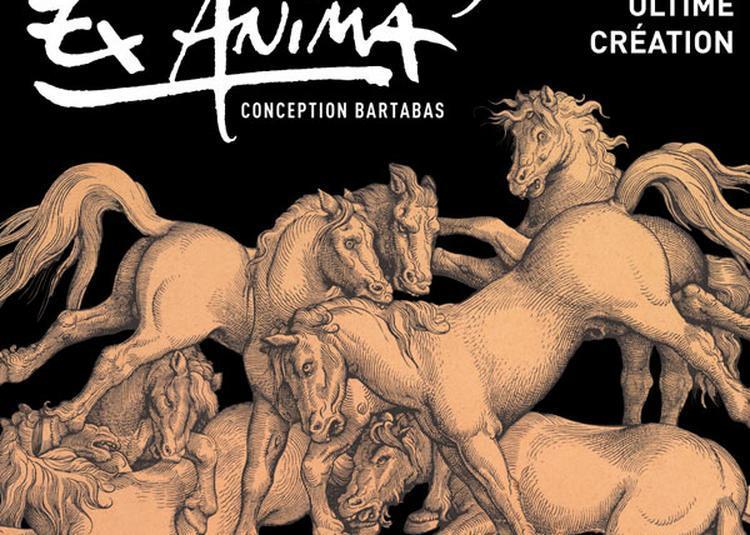 Zingaro  Ex Anima à Aubervilliers