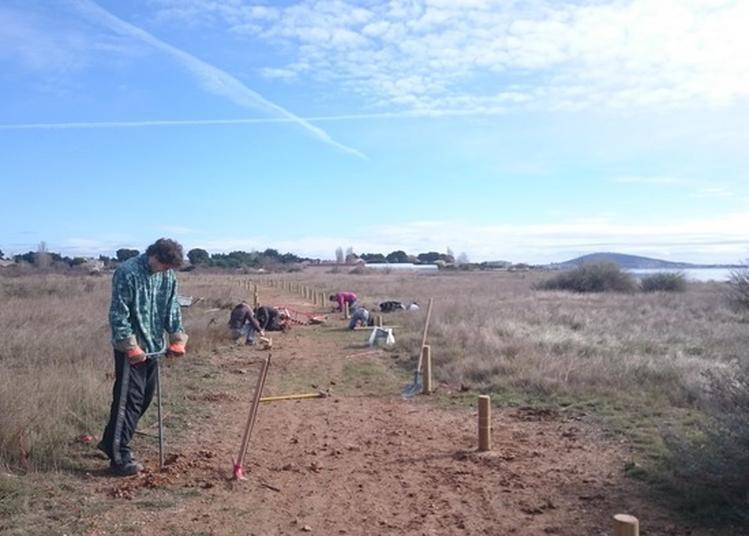 Zone Humide De La Conque À Mèze : Des Jeunes Au Service Du Patrimoine Naturel. à Meze