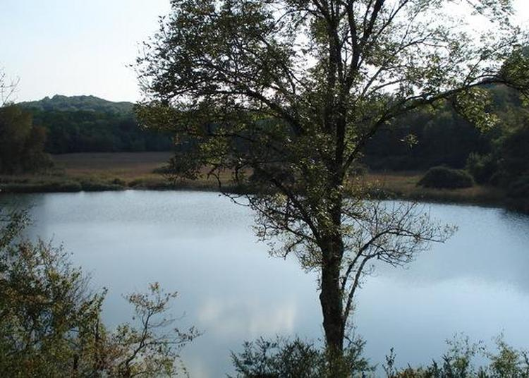 Zoom Sur La Tourbière Du Lac De Chailloux à Contrevoz